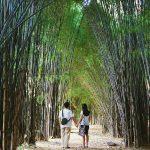 Hutan Bambu Keputih & Taman Sakura